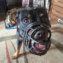 Собачья намордник, противоукусная маска для рта, пластиковая, против храпа, повязка для укуса, тренировочная маска для рта, намордник для собак