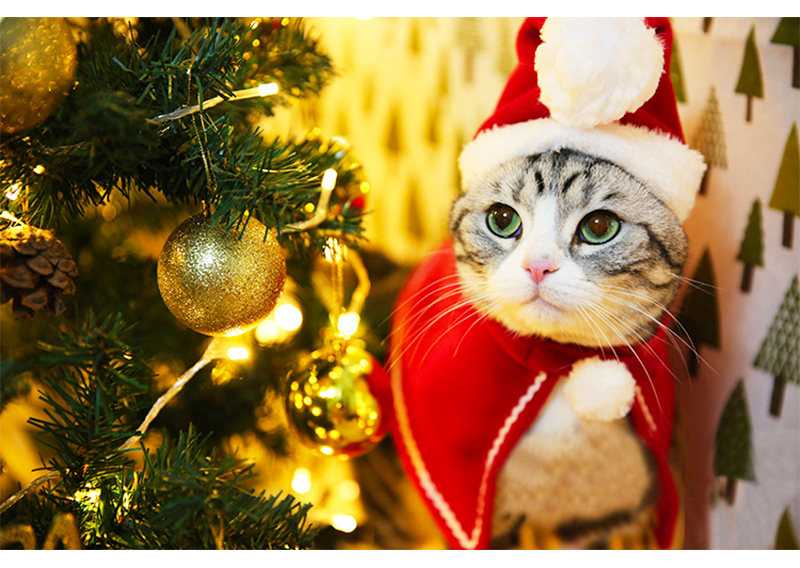 Pet Dog Cat Clothes Christmas Costume Cat Hat Scarf Cloak Dress Up For Kitten Puppy Small Dog Xmas New Year Costume Accessories 12