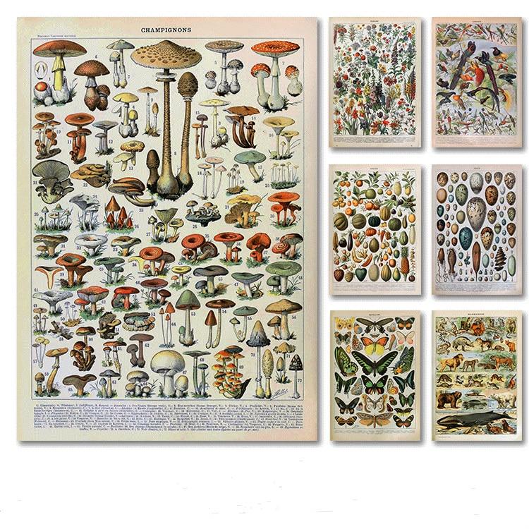 Palaeobios растение ретро постер цветок животные насекомые бабочки грибы холст живопись стена искусство холст Картина маслом домашний декор