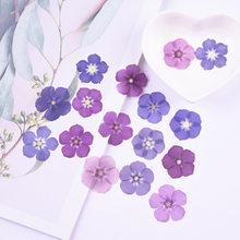 2-3cm/24 pces, pétalas de phlox do toque real da natureza, flores pressionadas para o cartão de presente do marcador das velas de diy, decoração facial do prego de flores seca