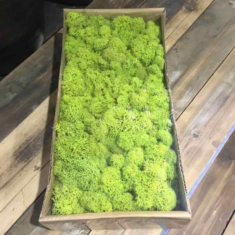 Зеленый Натуральный консервированный мох, стойкий норвежский оленевой мох, настоящий цветок для домашнего сада, свадебное украшение «сдел...