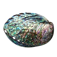 цены 10-12cm Large Rainbow Abalone Shell Charm Beach Seashell Car Office House Decor