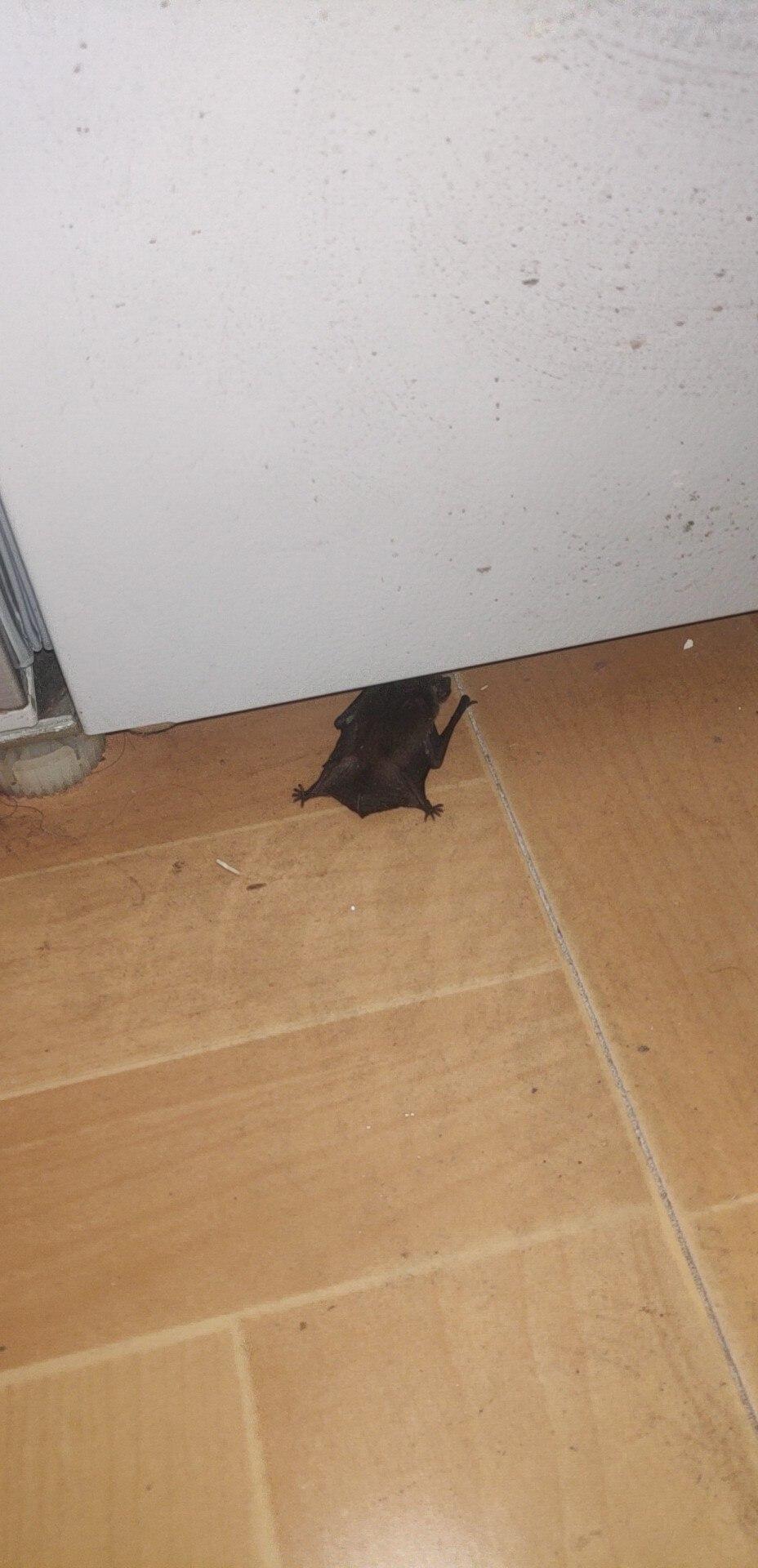 迷路的蝙蝠