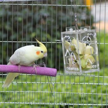Parrot Foraging Toy Feeder Innovative Educational Acrylic Wire Rope Bird Chewing Toy For Intelligence Improving 2
