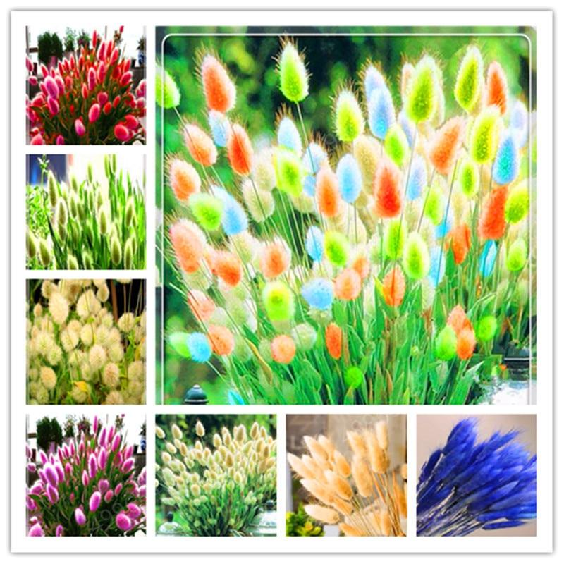 100 Pcs Rabbit Tails Grass Bonsai Colorful Fescue Bonsai Ornamental Beatuty Grasses Bonsai For Home Garden Potted Plants Decor