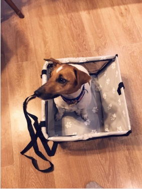 Pet Dog Car Carrier Seat Bag Waterproof Basket Folding Hammock Pet Carriers Bag For Small Cat Dogs Safety Travelling Mesh 31