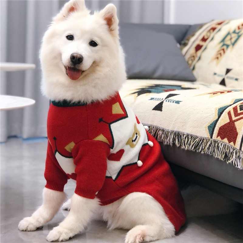 big dogs sweater winter (1)