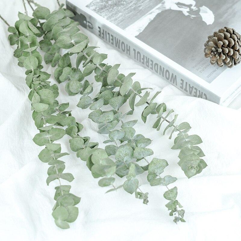 Natural eucalipto folhas ramos hastes secas flor real palnt ornamento para diy casamento tiro prop casa decoração suprimentos