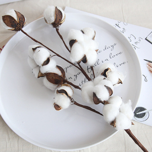 Naturally Dried Cotton Flowers Decorative Dry Flower Artificial Plants Floral Branch For DIY Home Room Decor Wedding Decoration