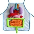 Human Body Organs An...