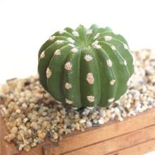 Artificial Lifelike Succulents Cactus Multi Type Plastic Plant Garden Miniature DIY Home Living Room Office Decoration