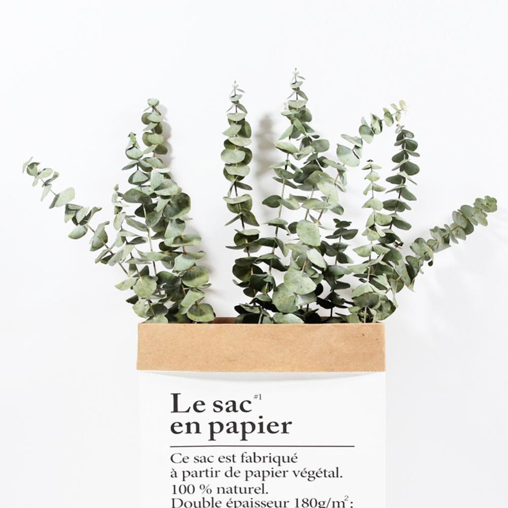 Natürliche Getrocknete Blumen eukalyptus äste große größe Frische Eukalyptus Blatt für immer blumen unsterblich blumen Decor Home party