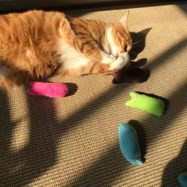 Juguete de Peluche para Gatos