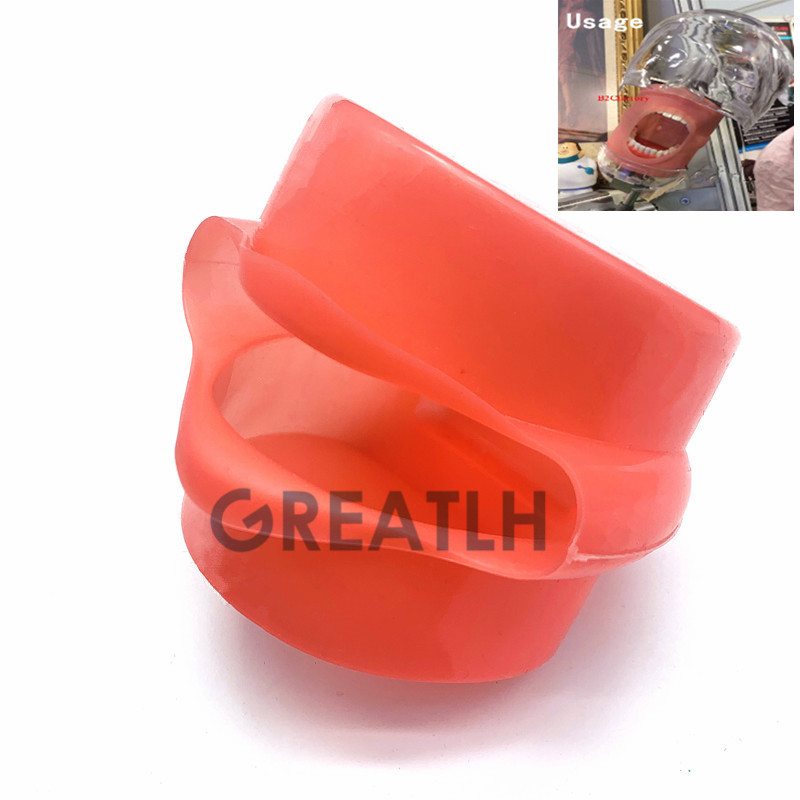 Dental Model Face replacement for Plastic Mouth Mask Study Teaching Model Mask Holder Decor(China)