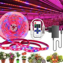 20M 15M 10M 5M pianta LED coltiva la luce 1: 1 spettro LED completo coltiva la striscia luminosa SMD DC 12V LED fito nastro per serre di fiori