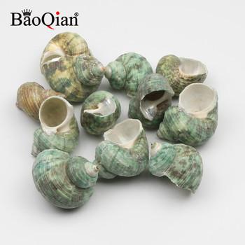 5 sztuk 30-40mm zielona muszla naturalne morskie powłoki muszla Coquillage Home Decoration DIY Craft Handmade muszla Home Decor tanie i dobre opinie ICEBERG Organiczny materiał MEDITERRANEAN B03456