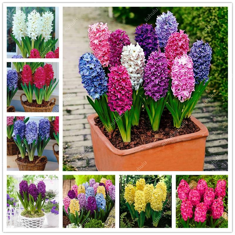 200 Pcs Artificial Hyacinth