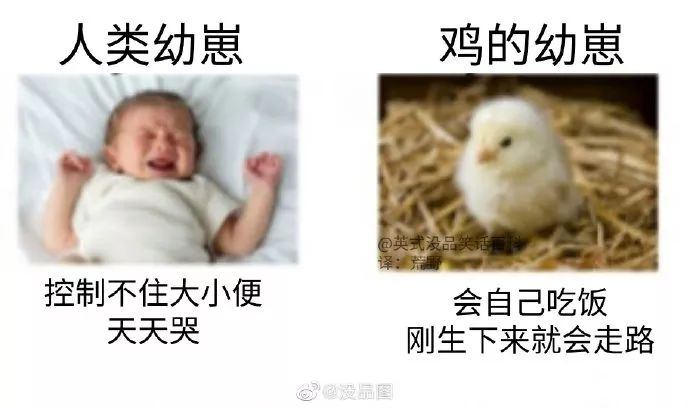 做人不如做鸡?插图1