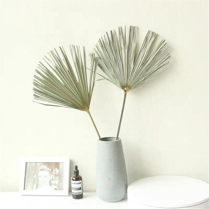 1PC Dried Fan Palm Leaf Natural Dried Leaf DIY Crafts Home Wedding Decoration Photo Props Supplies