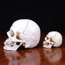 Копия медицинской анатомической формы черепа хумы lifesize 1:1