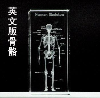 TOP best GIFT - medicine Medical Science Internal medicine Doctor skeleton Bone Figurine 3D Crystal statue -FREE SHIPPING cost