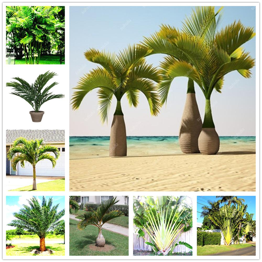 Plant Flower Bath Salts Palm Flores Essence 100Pcs XZZ-59