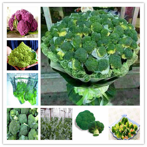 50 Pcs Broccoli