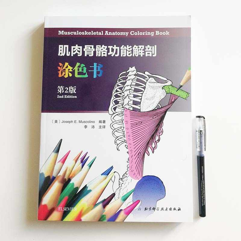 Musculoskeletal Anatomy Coloring Book Bilingual Chinese And English Version 2nd Edition By Joseph E Muscolino Aliexpress