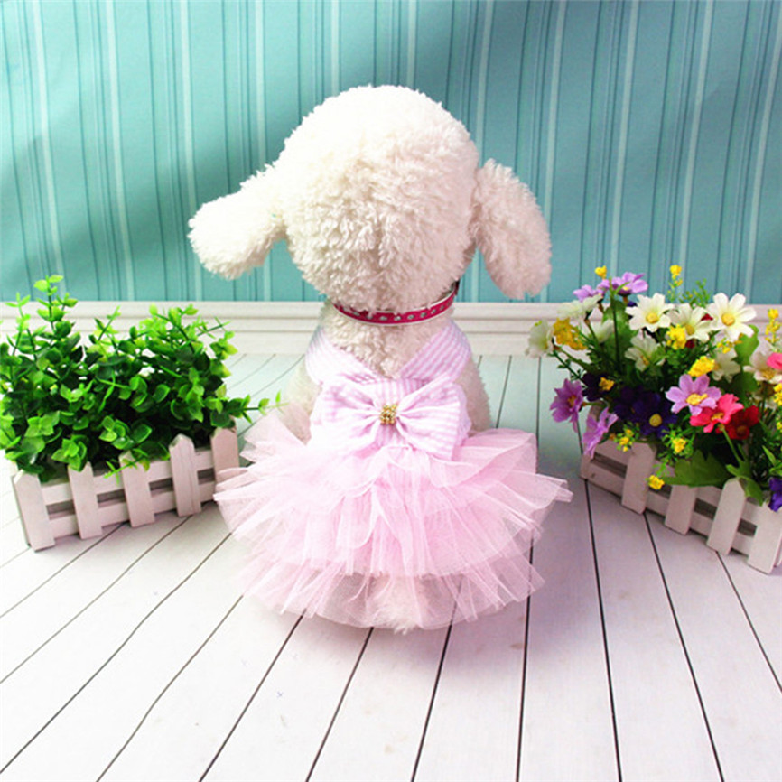 cute dog clothes for females