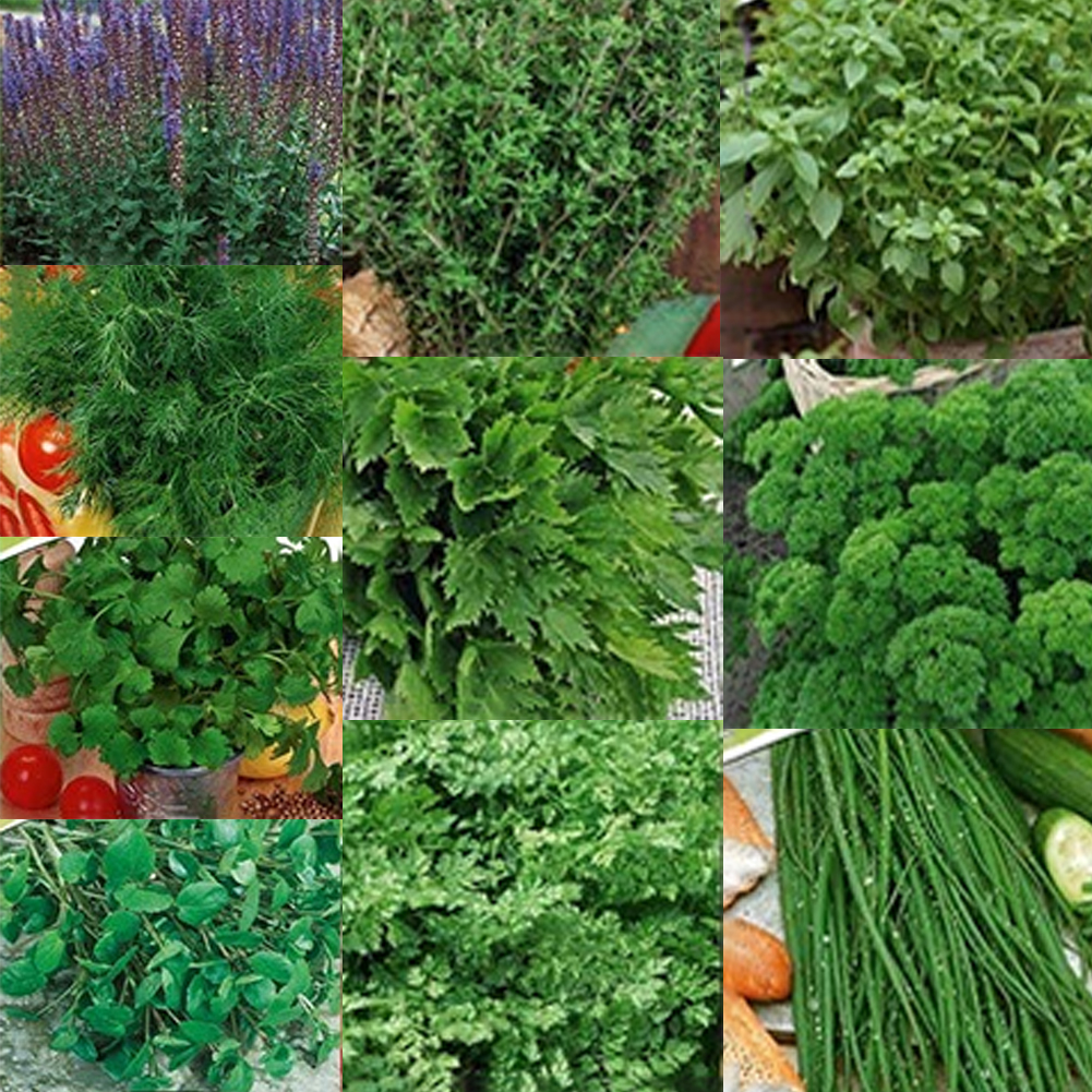 200pcs Mixed Vegetables Seeds Plants Nursery Seedling Grow For Home Garden