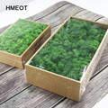 1000g Simulation Pflanzen Ewige Leben Moss/Garten Wohnkultur Wand DIY Blume Material Mini Garten Micro Landschaft Gefälschte moos Geschenk
