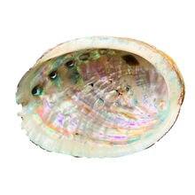 10 12 см Натуральная морская раковина Большая Морская Морской