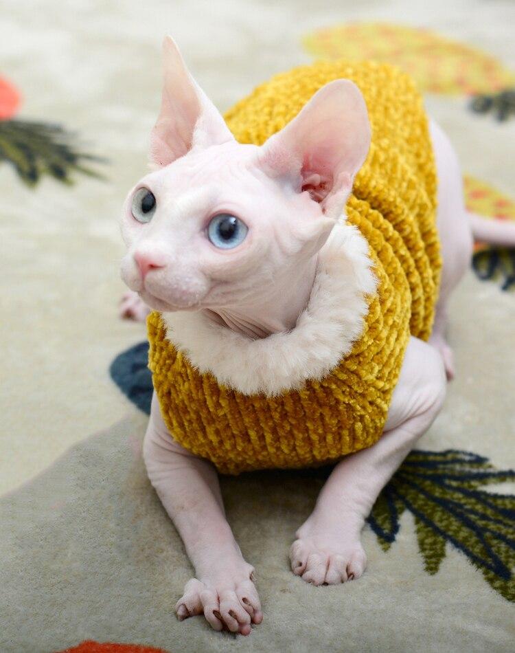 Cheap Roupas p gato