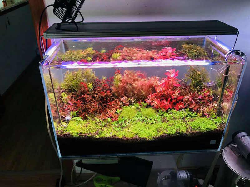 Chihiros WRGB wody światła LED do wzrostu roślin Chihiros inteligentne sterowanie wschód słońca zachód słońca zegar akwarium w stylu ADA