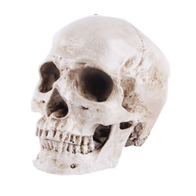 1:1 Skull Statue Sculpture Halloween Decoration Resin Skull Skeleton Crafts For Painting Medical Props Bar Counter Home Decor