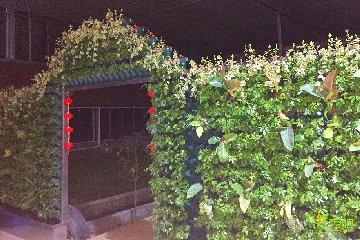 钱帅农场植物墙(温室大棚)