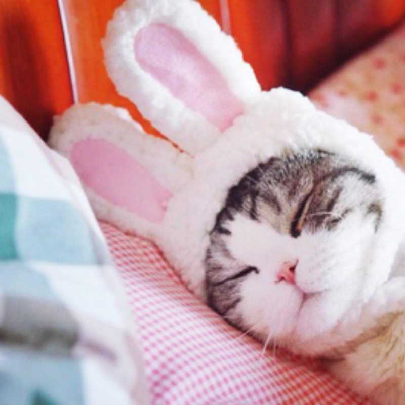 1 Pza de peluche de felpa lindo conejo oreja mascota gato perro cachorro sombrero gorra Halloween disfraz Cosplay disfraces fiesta regalo suministros para mascotas