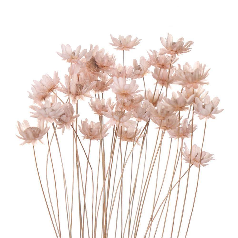 30 шт. декоративные засушенные цветы мини Дейзи маленькая звезда Цветы Букет натуральных растений сохранить цветочный, украшение для свадьб...