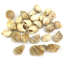 Natural Shell Conch Pendants Charms for Jewelry Making Supplies Pendant DIY Bracelet Necklaces Accessories Size 14x17mm