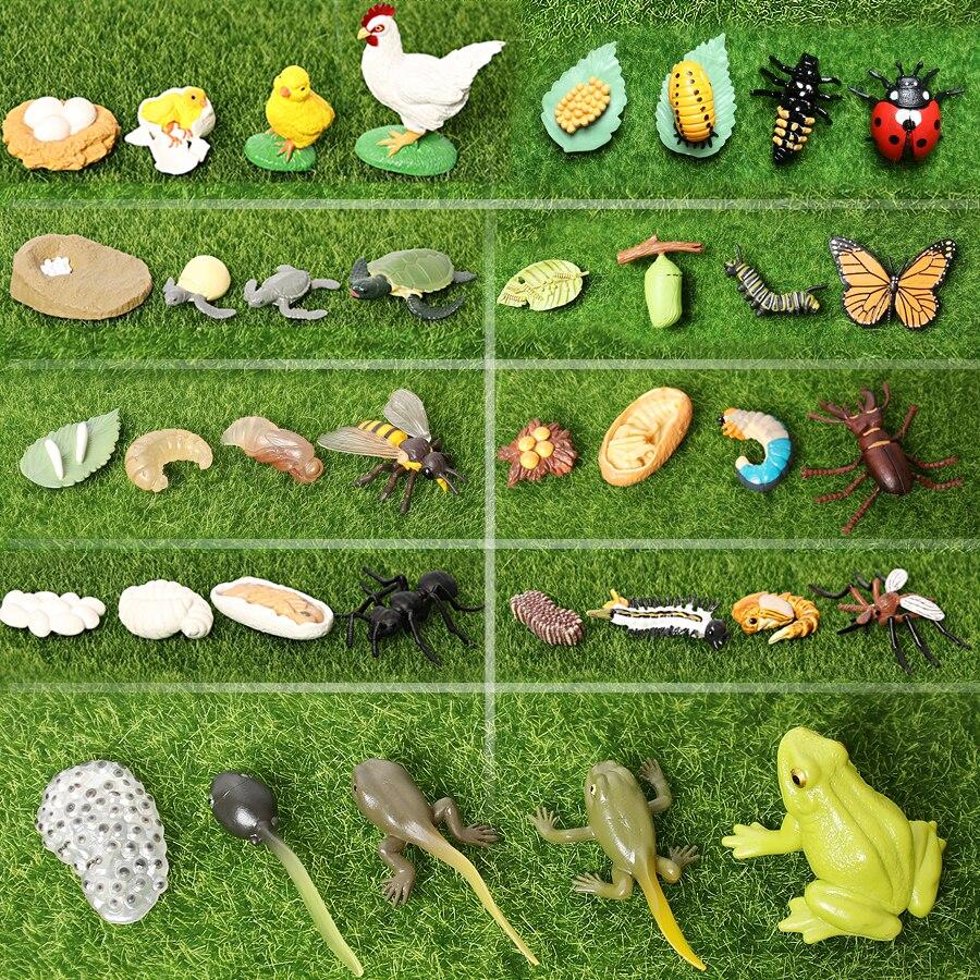 Имитация животных, фигурки животных с жизненным циклом, лягушка, муравей, комаров, морская черепаха, курица, Бабочка, цикл роста