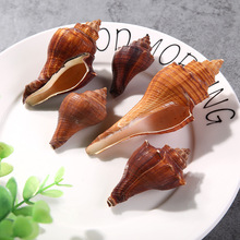 selling Marine natural shell red incense screw sea conch shells decoration aquarium decorations wholesale