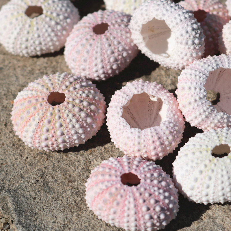 3-5cm Natural Small Pink  White Sea Urchin Shell  Crafts Natural Shell Conch Beach Wedding Decoration Coastal Home Decoration