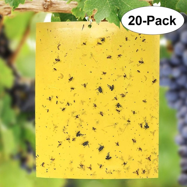 20Pcs Insects Pest Catcher Fly Trap Two-sided Glue Stickers For Kitchen Farm Plant Garden Buzz Fruit Fly Bug Mosquito Killer