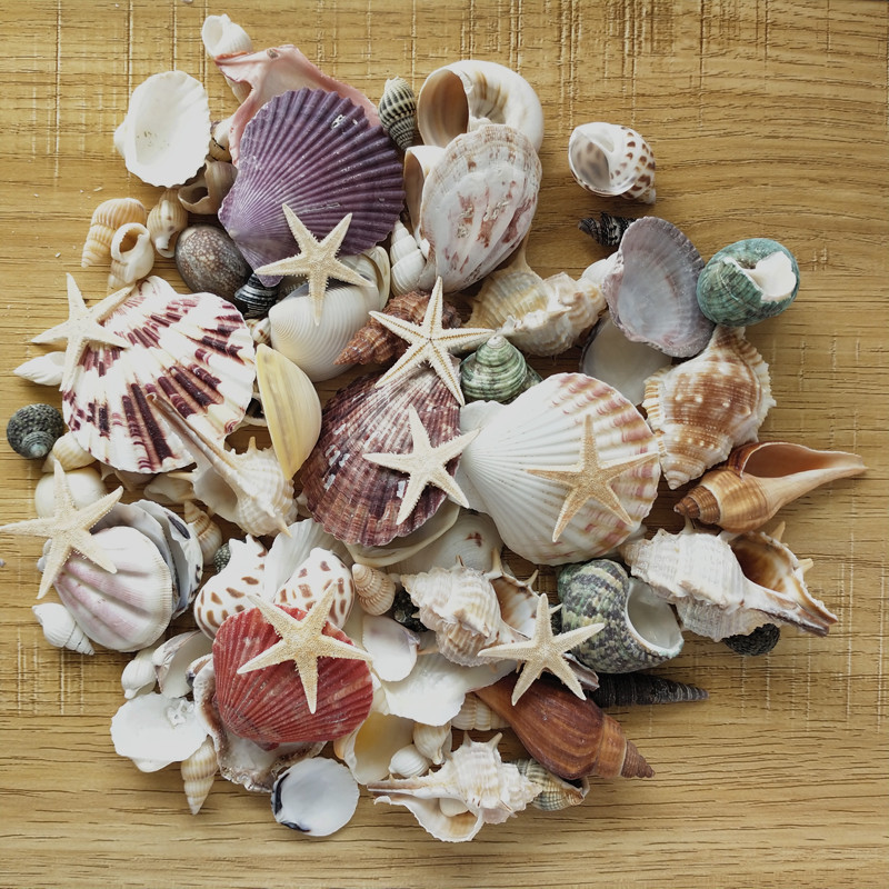 100PCS Mixed Ocean Sea Shells Wedding Decor Beach Theme Party, Seashells Home Decorations, Fish Tank,Candle Making Sea Star