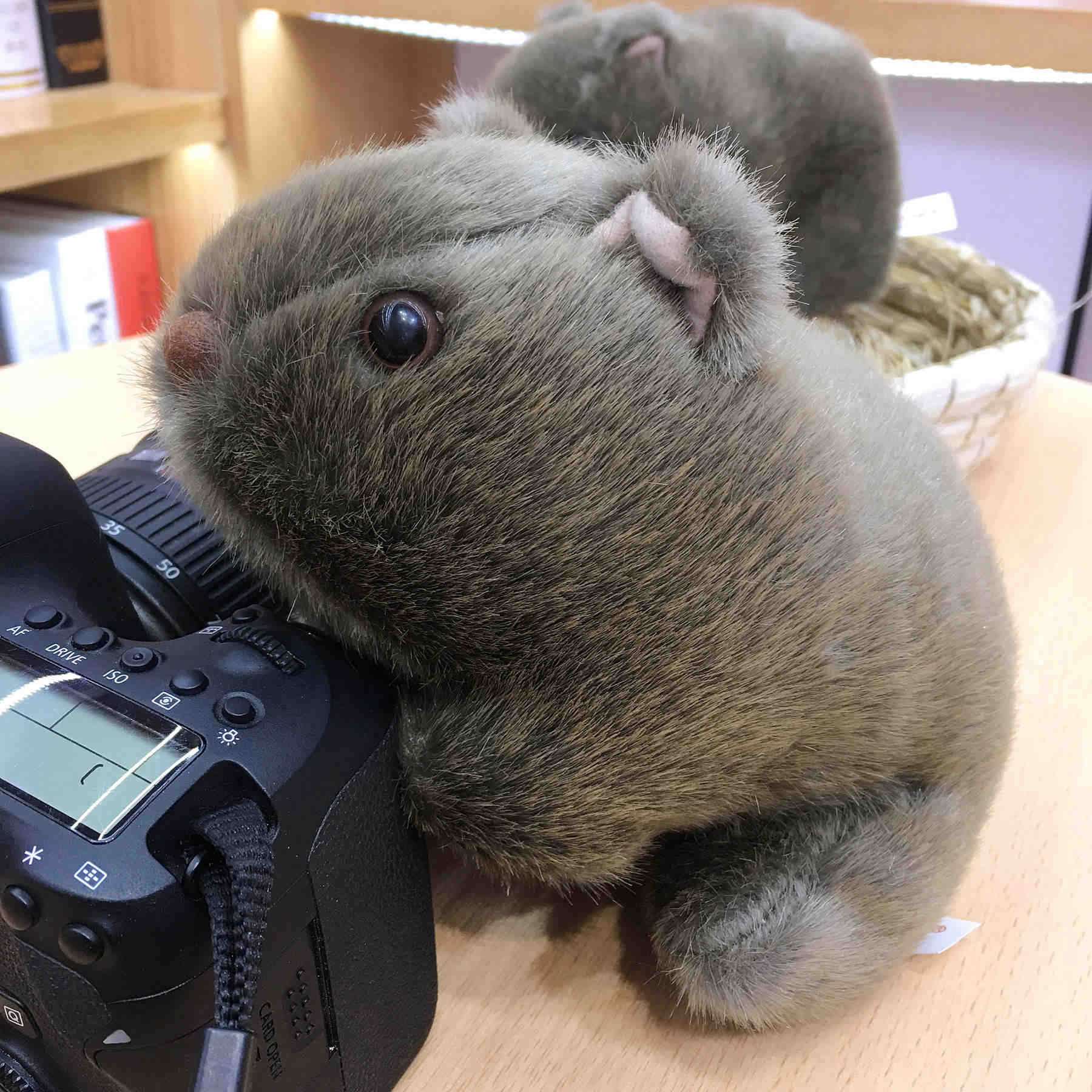 1pc 18cm Simulation Plush Wombat Guinea Pig Cavia Porcellus Toy Stuffed Wild Animal Doll Toys Baby Children Gift Home Decoration