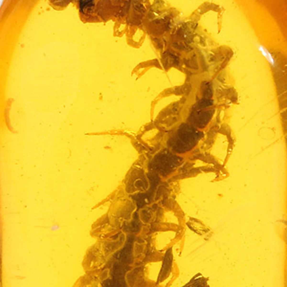 ענבר צמחים חרקים אמיתי נדלים תליון חן תכשיטי סוודר שרשרת אביזרי קישוט מלאכות מתנה