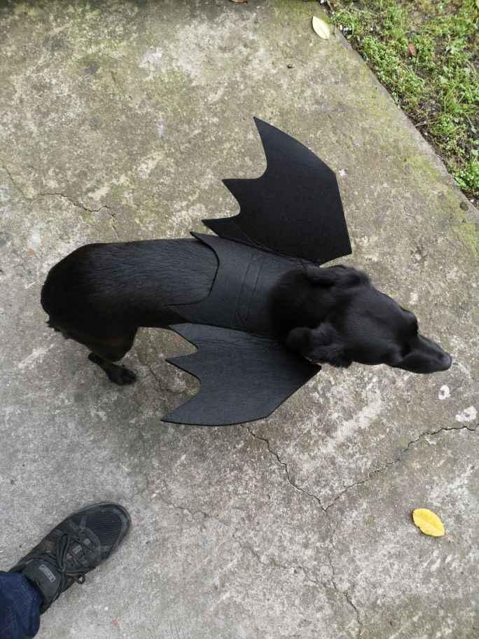 애완 동물 고양이 개 할로윈 코스프레 강아지 고양이를위한 재미 있은 의상 강아지 새끼 고양이 검은 박쥐 날개