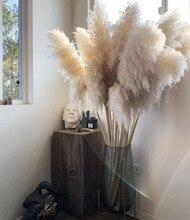55-60cm/natural reed secado flor grande pampas grama buquê cerimônia de casamento decoração de casa moderna