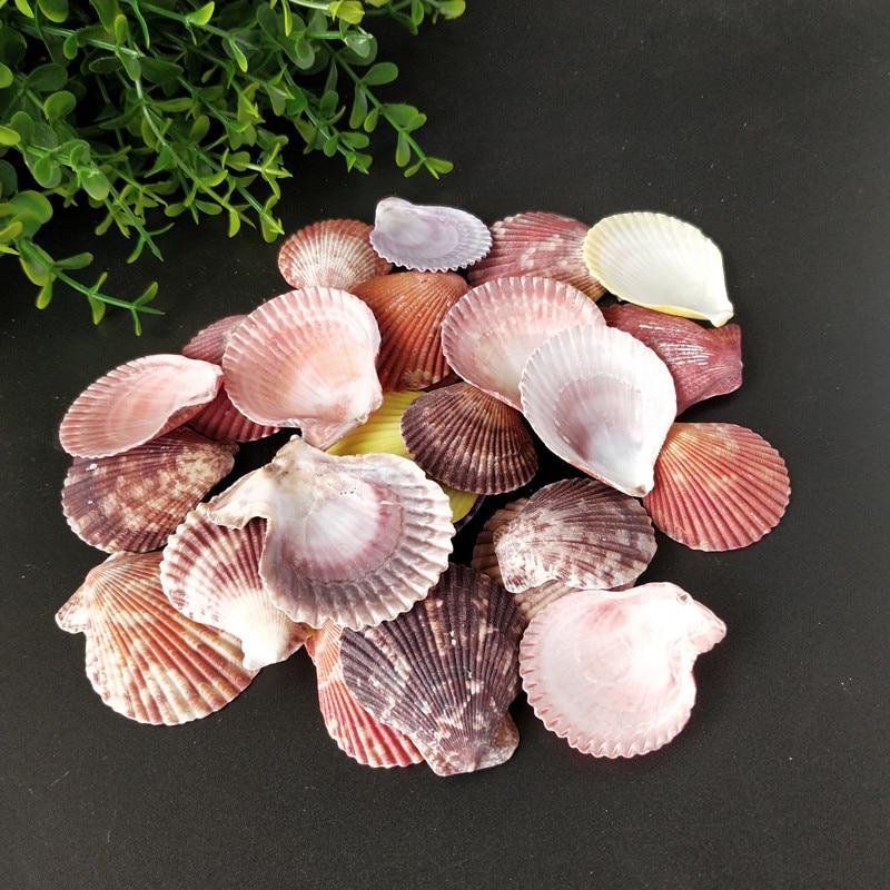 30pcs Colorful Natural Seashells Decorations Scallop Shells Crafts Decor Ornament  Colorful Shells Sea Star  Fish Conh