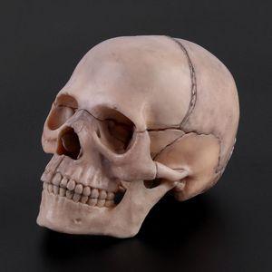 Image 2 - Herramienta de enseñanza médica desmontable, modelo de calavera anatómica 4D, 15 unidades